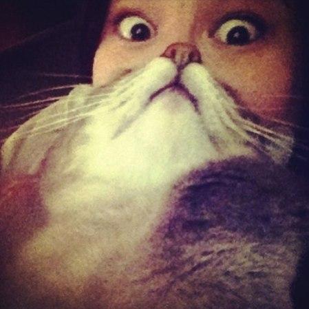 cat-beard2